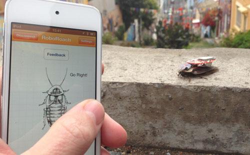 Du kan styre en kakkerlakk med telefonen din. Foto: Backyard Brains