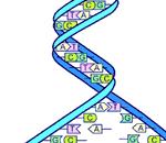 Gjennombrudd i DNA lagring