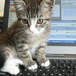 Dell: - Nei, det er ikke kattepiss