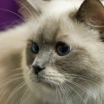 Forsker: – Katter tror du er en stor og dum katt