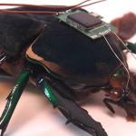 Er cyborg-kakerlakker de nye redningsteamene?